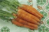 Морковь посевная гибрид Ранок F1