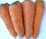 Морковь посевная линия Роксолана